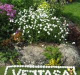 Česká píseň vysázená v našem zahradnictví