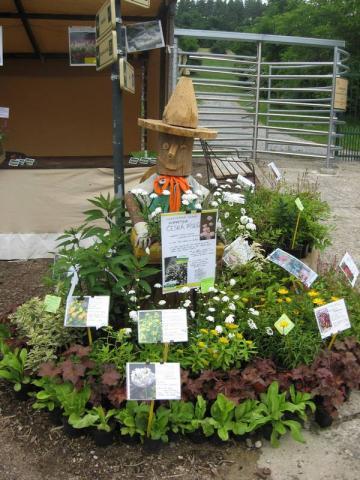 Pohled na našeho zahradního skřítka s našimi výpěstky